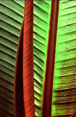 Palm leaves, by erin thomas